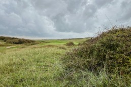 Domburgsche Golfclub green hole 7